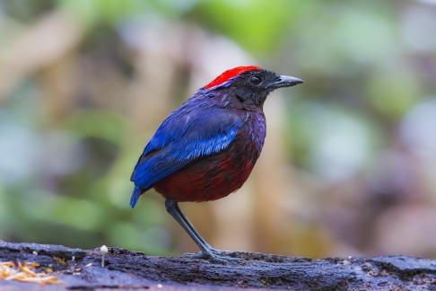 bird-2784010_1920