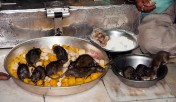 Karni-Mata-temple-rats-eating-food